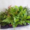 Fern Assorted Premium