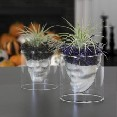 LT Glass Skulls w/Tillandsia