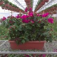 "Window Box Trellis 24""h"