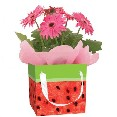 WSEEDS104 Watermelon Gift Bag
