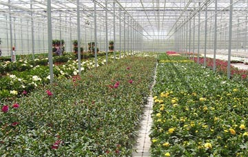 Dahlia Production