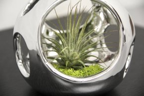 LT Open Air Collection w/Tillandsia